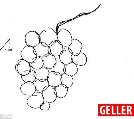 盖勒精确重现了一串24颗的葡萄!