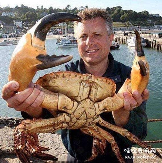 会爬树的螃蟹你了解么在中国的海南三亚也有椰子蟹