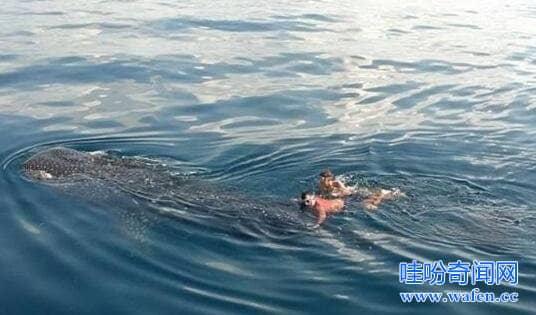 传海底惊现12米巨型真龙蛟龙号专家确认为未知生物
